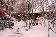 28-11-25yuki